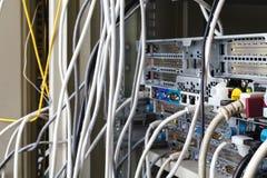Καλώδια Ethernet που συνδέονται με το διακόπτη Στοκ Φωτογραφία