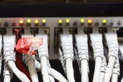 Καλώδια Ethernet που συνδέονται με το διακόπτη Στοκ φωτογραφία με δικαίωμα ελεύθερης χρήσης