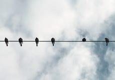 καλώδιο πουλιών Στοκ Εικόνες
