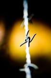 καλώδιο Στοκ φωτογραφίες με δικαίωμα ελεύθερης χρήσης