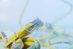 Καλώδιο Ethernet που απομονώνεται Στοκ εικόνες με δικαίωμα ελεύθερης χρήσης