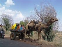 καμήλα Ινδία Rajasthan trasport Στοκ φωτογραφίες με δικαίωμα ελεύθερης χρήσης