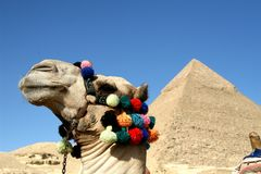 Καμήλα μπροστά από τις μεγάλες πυραμίδες Στοκ Φωτογραφίες