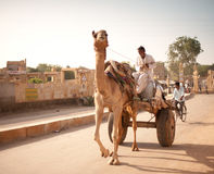 Καμήλα παράδοσης ύδατος στην αυγή Στοκ Φωτογραφία
