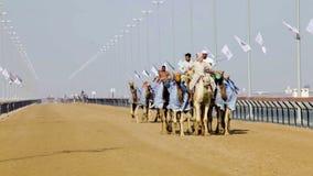 Καμήλα που συναγωνίζεται στο Ντουμπάι απόθεμα βίντεο