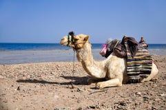 Καμήλα στήριξης στοκ φωτογραφία με δικαίωμα ελεύθερης χρήσης