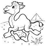 καμήλα Στοκ Εικόνα