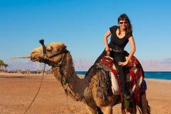 Καμήλα Αίγυπτος γύρου Στοκ φωτογραφία με δικαίωμα ελεύθερης χρήσης