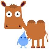 Καμήλα και νερό Στοκ φωτογραφία με δικαίωμα ελεύθερης χρήσης