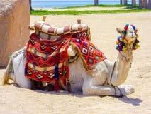 Καμήλα στην παραλία ερήμων που περιμένει τους τουρίστες Στοκ φωτογραφία με δικαίωμα ελεύθερης χρήσης