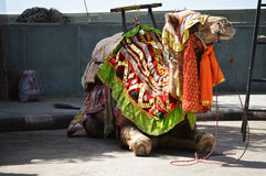 Καμήλα συνεδρίασης Στοκ εικόνες με δικαίωμα ελεύθερης χρήσης