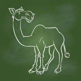Καμήλα σχεδίων χεριών στον πράσινο πίνακα - διανυσματική απεικόνιση Στοκ Φωτογραφίες