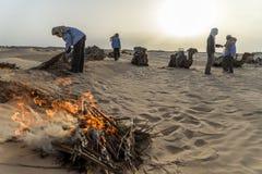 Καμήλα Τυνησία Στοκ εικόνα με δικαίωμα ελεύθερης χρήσης