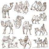 Καμήλες - ένα συρμένο χέρι πακέτο πρωτότυπα Στοκ Φωτογραφίες