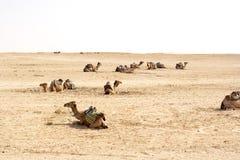 Καμήλες, έρημοι Σαχάρας, Τυνησία Στοκ φωτογραφία με δικαίωμα ελεύθερης χρήσης