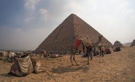 Καμήλες μπροστά από τις πυραμίδες Giza, Αίγυπτος Στοκ Εικόνες