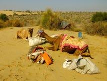 Καμήλες που στηρίζονται κατά τη διάρκεια του σαφάρι καμηλών, Thar έρημος, Ινδία Στοκ Φωτογραφία