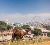Καμήλες σε Pushkar Mela (έκθεση καμηλών Pushkar), Ινδία στοκ φωτογραφίες