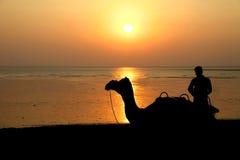 Καμήλες σκιαγραφιών στην Ινδία στο ηλιοβασίλεμα θάλασσας Στοκ εικόνα με δικαίωμα ελεύθερης χρήσης