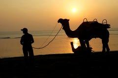 Καμήλες σκιαγραφιών στην Ινδία στο ηλιοβασίλεμα θάλασσας Στοκ Εικόνα