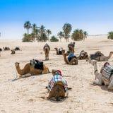 Καμήλες στην όαση ερήμων Στοκ φωτογραφία με δικαίωμα ελεύθερης χρήσης