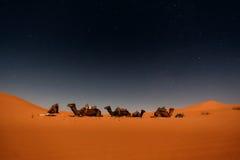 Καμήλες στους αμμόλοφους Merzouga Στοκ Φωτογραφία