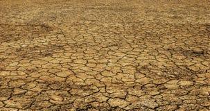 Καμία ζωή στο ξηρό χώμα Στοκ Εικόνες