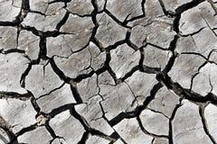 Καμία ζωή στο ξηρό χώμα Στοκ φωτογραφία με δικαίωμα ελεύθερης χρήσης