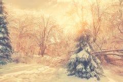 Καμμένος ήλιος που λάμπει πίσω από τα παγωμένα δέντρα Στοκ Εικόνα