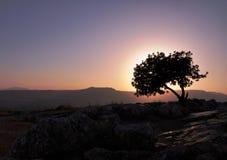 καμμένος δέντρο στοκ εικόνα με δικαίωμα ελεύθερης χρήσης