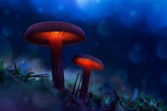 Καμμένος μανιτάρια σε ένα δάσος νεράιδων ο μαγικός κόσμος του μανιταριού στοκ εικόνες