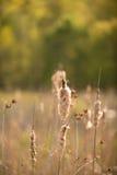 Καμμένος λουλούδια στο πάρκο λιβαδιών Huntley Στοκ φωτογραφίες με δικαίωμα ελεύθερης χρήσης