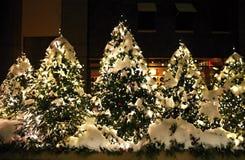 Καμμένος υπαίθρια χριστουγεννιάτικα δέντρα τη νύχτα Στοκ Φωτογραφίες