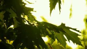 Καμμένος φύλλα δέντρων φιλμ μικρού μήκους