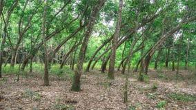 καμμμένα δέντρα Στοκ εικόνα με δικαίωμα ελεύθερης χρήσης