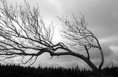 καμμμένη έξω μορφή Στοκ φωτογραφία με δικαίωμα ελεύθερης χρήσης