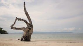 Καμμμένος ξηρός κορμός δέντρων στην παραλία άμμου στο υπόβαθρο των ήρεμων κυμάτων φιλμ μικρού μήκους