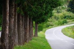 καμπή μετά από τα οδικά δέντρα Στοκ Εικόνα