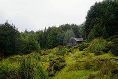 Καμπίνα στα δάση Στοκ Εικόνα