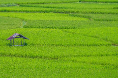 Καμπίνα στον πράσινο τομέα ρυζιού Στοκ Φωτογραφίες