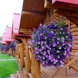 Καμπίνες διακοπών Pocahontas, Αλμπέρτα/Καναδάς - Septermber 2, 2016: Ξύλινα καμπίνες και λουλούδια Στοκ φωτογραφία με δικαίωμα ελεύθερης χρήσης
