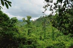 Καμποτζιανή ζούγκλα Στοκ Εικόνες