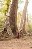 Καμποτζιανό κορίτσι στο Khmer φόρεμα που υπερασπίζεται ένα παλαιό δέντρο σε Angkor Thom Στοκ Εικόνα