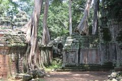 Καμπότζη Ναός TA Prohm Το Siem συγκεντρώνει την επαρχία Το Siem συγκεντρώνει την πόλη Στοκ εικόνες με δικαίωμα ελεύθερης χρήσης