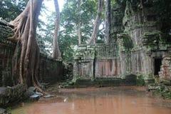 Καμπότζη Ναός TA Prohm Το Siem συγκεντρώνει την επαρχία Το Siem συγκεντρώνει την πόλη Στοκ φωτογραφία με δικαίωμα ελεύθερης χρήσης