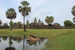 Καμπότζη Ναός Wat Angkor Το Siem συγκεντρώνει την επαρχία Το Siem συγκεντρώνει την πόλη Στοκ φωτογραφία με δικαίωμα ελεύθερης χρήσης