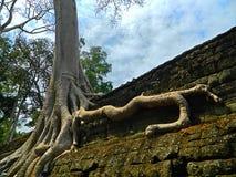 Καμπότζη ο ναός TA Prohm Στοκ Εικόνα