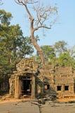 Καμπότζη, Angkor Thom, TA Prohm Στοκ Εικόνες