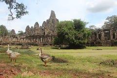 Καμπότζη bayon ναός της Καμπότζης riep πλησίον siem Το Siem συγκεντρώνει την επαρχία Το Siem συγκεντρώνει την πόλη Στοκ φωτογραφία με δικαίωμα ελεύθερης χρήσης