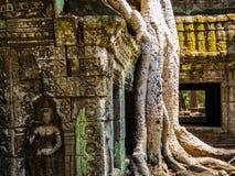 Καμπότζη prohm TA Στοκ φωτογραφία με δικαίωμα ελεύθερης χρήσης